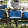Checking the hives — Stockfoto