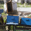 Checking the hives - Stock Photo