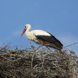 Stork on the nest — Stock Photo