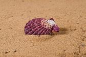 Seashell 3 — Stock Photo