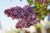 Flower3 — Stock Photo