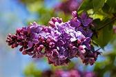 Flower 1 — Stock Photo