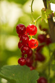 Red berry — Stock Photo