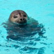 Seal — Stock Photo #23503513