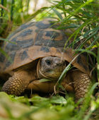 A tortoise in the grass — Stock Photo