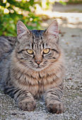 A cat at the sun — Stock Photo