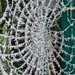Stock Photo: Cobweb of frost