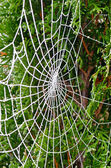Cobweb at frost — Stock Photo