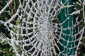 Cobweb of frost — Stock Photo