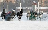 Paarden competitie — Stockfoto