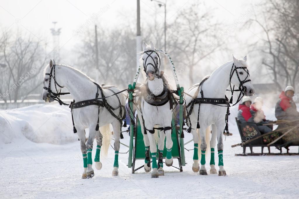 Три белых коня плюс