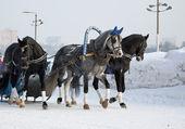 Three dark horses — Stock Photo