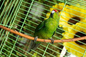 Parakeet in the cage — Stock Photo
