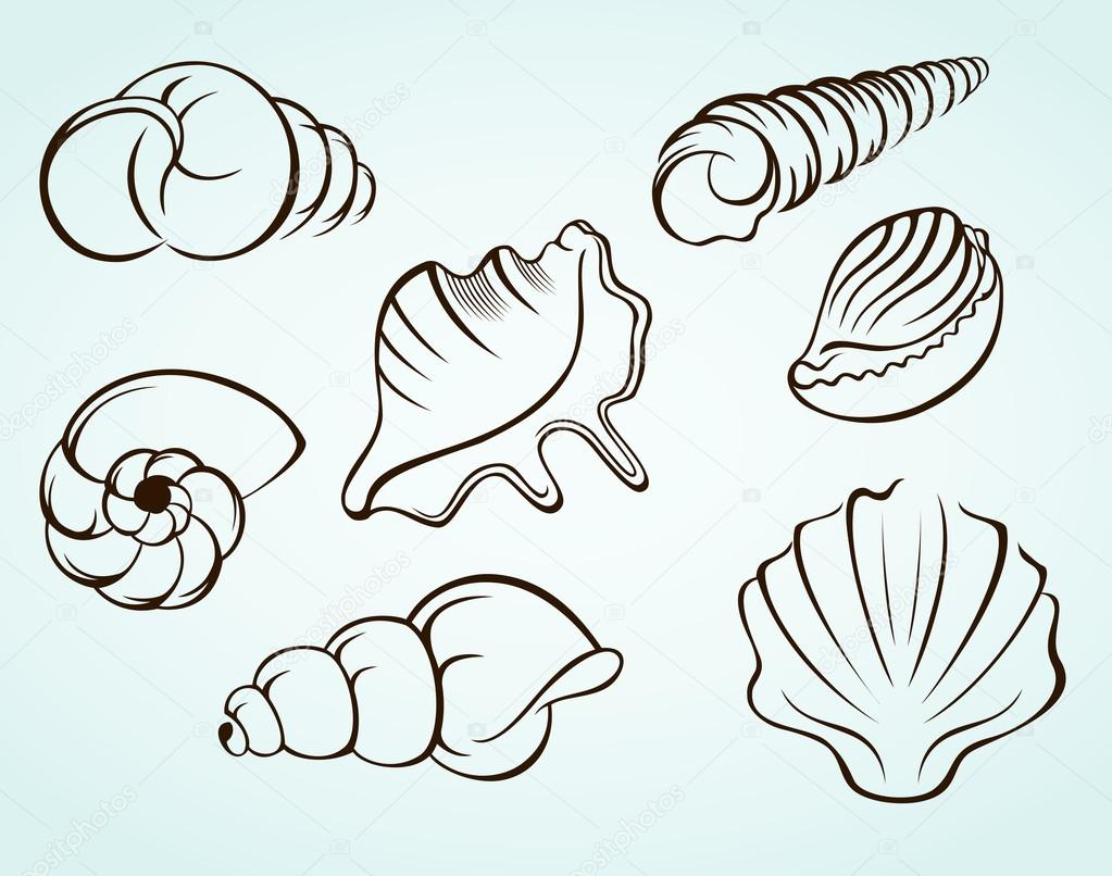 贝壳— 图库矢量图像08