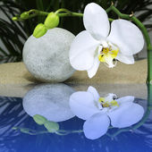Orchid with water reflection — Stockfoto