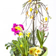 Flower- pot with different flowers - Stock Photo