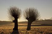 Tree in back-light — Stock Photo