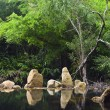 Stock Photo: Stones and green trees above water mirror, Vietnam