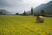 Round haystack of straw in the meadow, Greece — Stock Photo