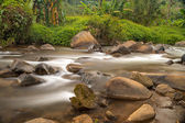 Stream in the forest of  Thailand — Stock Photo