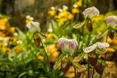 Orchideje na barevném pozadí — Stock fotografie