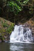 Waterfall  in the forest of  Thailand. Doi Inthanon National Park — Foto Stock