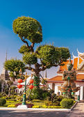 Bonsai and demon-guard at the palace, Wat Arun, the Temple of Dawn, Bangkok Thailand. Ancient buildings of public property — Stock Photo