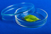 Labware dishes with plant for biochemical experiment. — Stock Photo