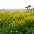 Rape field — Stock Photo #18303853