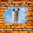 Porous wall to see the dog — Stock Photo