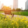 Shanghai Lujiazui financial district, park benches — Stock Photo