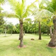 Tropical forest with palms — Stock Photo #46003509