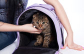 Cute cat with travel house on white background — Stock Photo