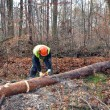 Lumberjack during work — Foto de stock #19004789