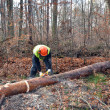 Foto Stock: Lumberjack during work