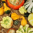 Variety of ornamental pumpkins — Stock Photo