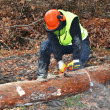 Lumberjack doing his work — Stock Photo