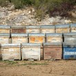 Stock Photo: Beehives (wooden), Spain