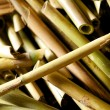 Cut river cane or bamboo — Stock Photo