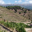Organic vineyard in Priorat (aka Priorato), Spain — Stock Photo #18143795