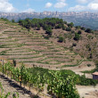 Organic vineyard in Priorat (aka Priorato), Spain — Stock Photo