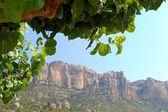 Vista de las montañas del montsant con el árbol en primer plano, priorat, españa — Foto de Stock