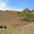 Stock Photo: Gobi Yolyn Am Valley, Mongolia