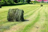 Harvested field with straw bales in summer — Stockfoto
