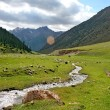 Ashukashka Suu valley, Tien Shan mountains, Kyrgyzstan — Stock Photo