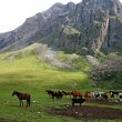 Stock Photo: Horses in AshukashkSuu valley, Tien Shmountains, Kyrgyzstan