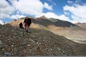 吉尔吉斯斯坦是 ak shyrak 地区,天山山脉, — 图库照片