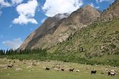 Tien Shan mountains, Kyrgyzstan, Dzhuku Valley — Stock Photo