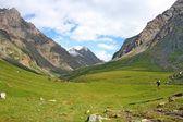 Horses in Ashukashka Suu valley, Tien Shan mountains, Kyrgyzstan — Stock Photo