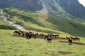 Horses in Ashukashka Suu valley, Tien Shan mountains, Kyrgyzstan — Stock Photo